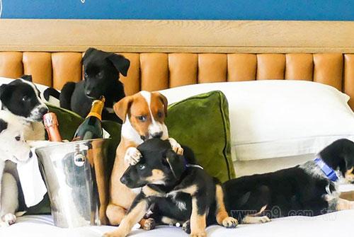 puppy-prosecco_0823_2.jpg